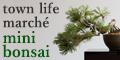 ミニ盆栽セット【タウンライフマルシェ】